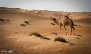 oman-desert-dune-G-3