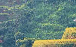 903500_w-700_h-438_q-50_m-crop